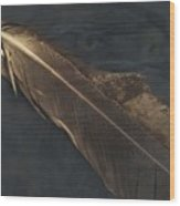 Eagle Feather   -006 Wood Print