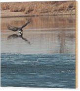Eagle Fishing Wood Print