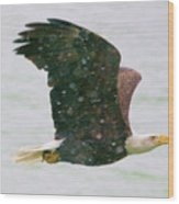 Eagle Flying In Snow Wood Print