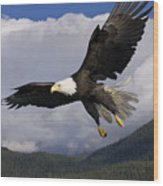 Eagle Flying In Sunlight Wood Print