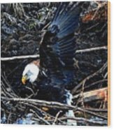 Eagle Getting Ready To Feed Wood Print