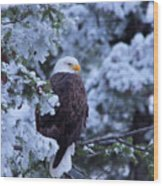 Eagle In A Frosted Tree Wood Print