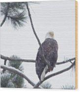 Eagle In A Pine Tree Wood Print