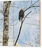 Eagle In A Tall Tree Wood Print