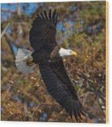 Eagle In Fall Wood Print