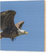 Eagle In Flight Wood Print