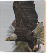 Eagle In Flight With Fish Wood Print