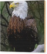 Eagle In The Night Wood Print