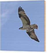 Eagle Lakes Park - Osprey In Flight With Sea Fish Meal Wood Print