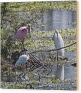 Eagle Lakes Park - Roseate Spoonbill And Friends, Socializing Wood Print