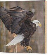 Eagle Landing On Perch Wood Print