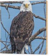 Eagle Mean Muggin Me Wood Print