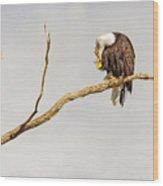 Eagle Nail Biting  Wood Print