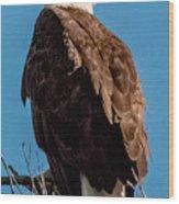 Eagle Of The Salt River Wood Print