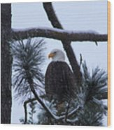 Eagle On A Frosted Limb Wood Print