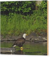 Eagle On A River Rock Wood Print