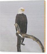 Eagle On A Snag  Wood Print