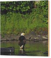 Eagle On River Rock II Wood Print