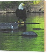 Eagle On River Rock IIi Wood Print