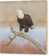 Eagle Overlooking Colorado River Wood Print