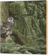 Eagle Owl In Forest Wood Print