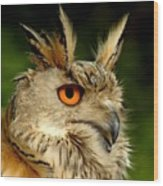 Eagle Owl Wood Print by Jacky Gerritsen