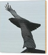Eagle Park Wood Print