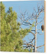 Eagle Perch Wood Print