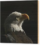 Eagle Profile 4 Wood Print