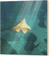 Eagle Ray Underwater Wood Print
