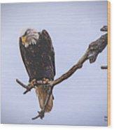 Eagle Searching Wood Print