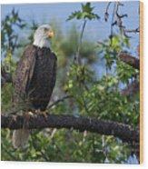 Eagle Series 13 Wood Print
