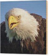 Eagle Stare 2 Wood Print