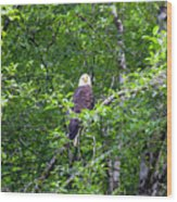 Eagle Watch Wood Print