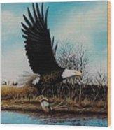 Eagle With Decoy Wood Print