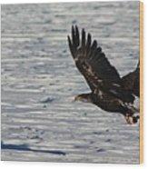 Eagle_7894 Wood Print