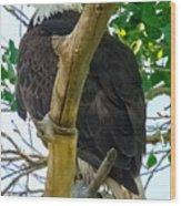 Eagles Of The Salt River Wood Print