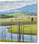 Eagles View, Hayden Valley, Yellowstone Wood Print