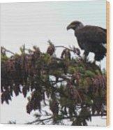 Eaglet In Pines Wood Print