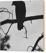 Eaglet Silhouette Wood Print