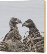 Eaglets Having A Chat Wood Print
