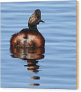 Eared Grebe Reflecting On Calm Water Wood Print