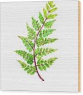 Eared Lady Fern Wood Print