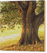 Early Autumn Oak Wood Print