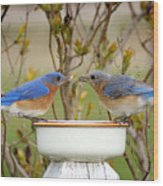 Early Bird Breakfast For Two Wood Print
