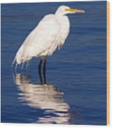 Early Bird Photograph Wood Print