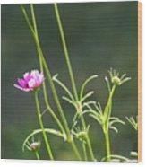 Early Bloomer Wood Print