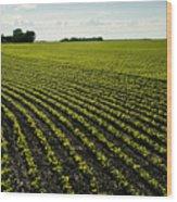Early Growth Soybean Field Wood Print
