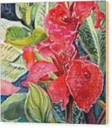 Early Morning Cannas  Wood Print