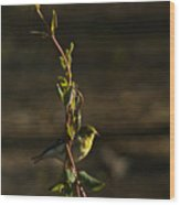 Early Morning For American Golden Finch Wood Print